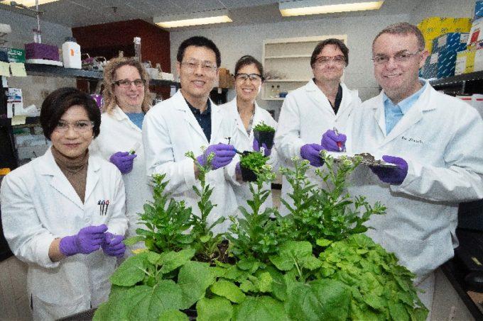 白衣を着て植物を持ちながら立つ5人の人