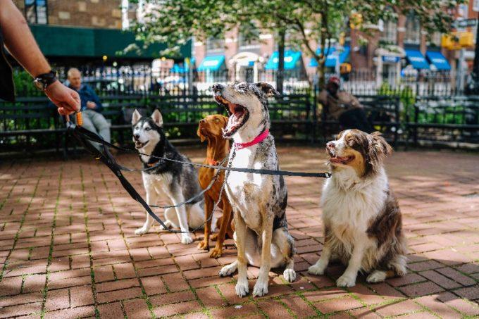 公園にいる4匹の犬
